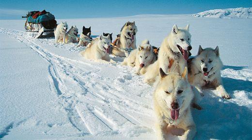 Excursion-Dogsledding_Reykjavik_Iceland